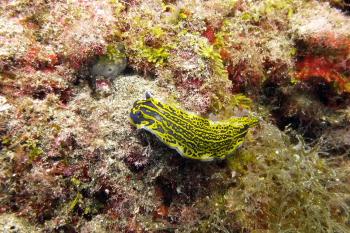 Lanzarote Diving Dscf6421