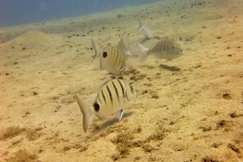 Lanzarote Diving Dscf6422