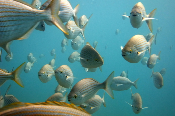 Lanzarote Diving Dscf6512