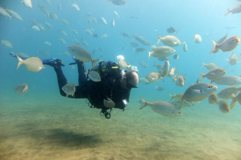 Lanzarote Diving Dscf6513