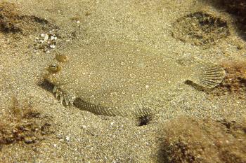 Lanzarote Diving Dscf6517