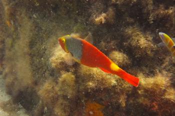 Lanzarote Diving Dscf6518