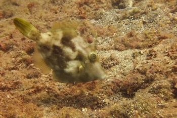 Lanzarote Diving Dscf6520