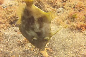 Lanzarote Diving Dscf6521