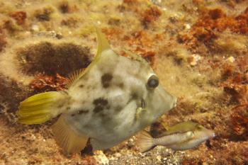 Lanzarote Diving Dscf6522