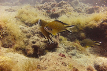 Lanzarote Diving Dscf6530