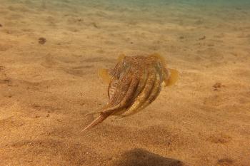 Lanzarote Diving Dscf6618