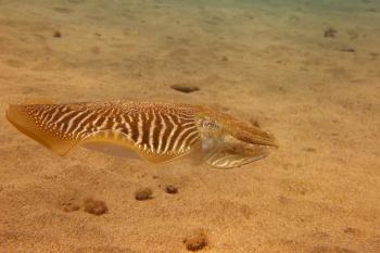 Lanzarote Diving Dscf6619