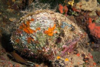 Lanzarote Diving Img_5031