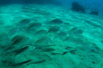 Lanzarote Diving Img_5035