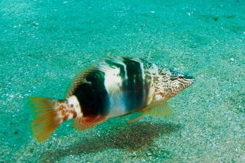 Lanzarote Diving Img_5036
