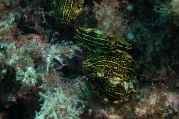 Lanzarote Diving Img_5037