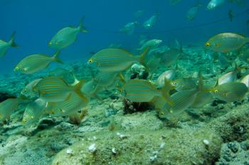Lanzarote Diving Img_5120