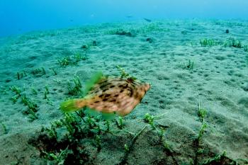 Lanzarote Diving Img_5123