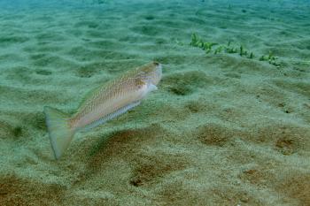 Lanzarote Diving Img_5126