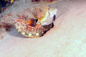 Lanzarote Diving Img_5210