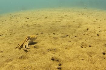 Lanzarote Diving Img_5211