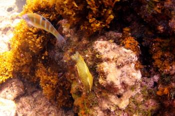 Lanzarote Diving Img_5216