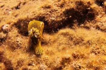 Lanzarote Diving Img_5217