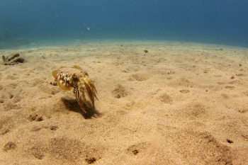 Lanzarote Diving Img_5218