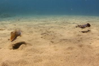 Lanzarote Diving Img_5219
