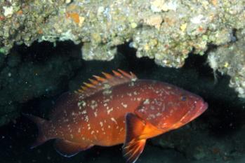 Lanzarote Diving Img_5311