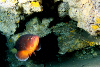 Lanzarote Diving Img_5312