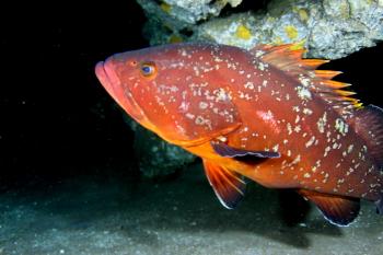 Lanzarote Diving Img_5313