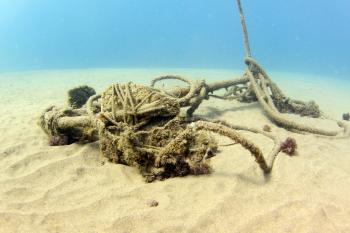 Lanzarote Diving Img_5315