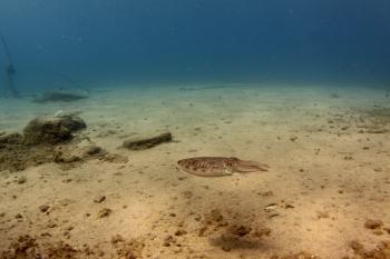 Lanzarote Diving Img_5317