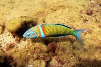 Lanzarote Diving Img_5318