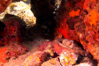 Lanzarote Diving Img_5319