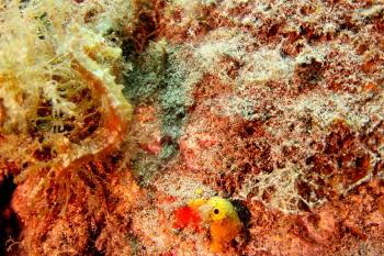 Lanzarote Diving Img_5320