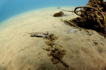 Lanzarote Diving Img_5324