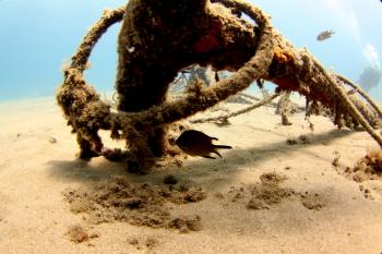 Lanzarote Diving Img_5411