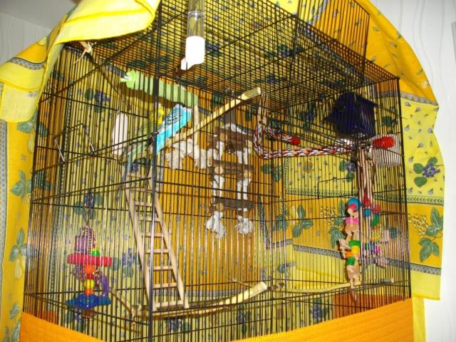 A la découverte de la nouvelle cage ! Imgp2414