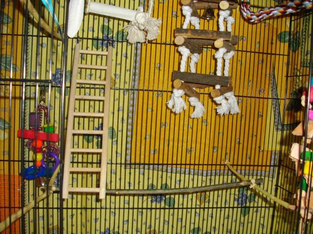 A la découverte de la nouvelle cage ! Imgp2416