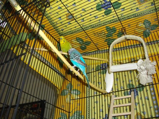 A la découverte de la nouvelle cage ! Imgp2417