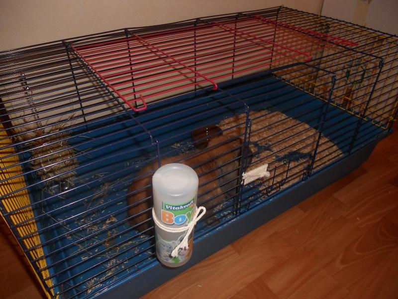 HOUBLON, lapin mâle ( Adopte ! ) Lapino11