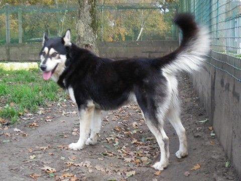 URGENT EUTHANASIE BAROUKtype, mala (m) né 09/2007/pas de chats pas de chiens, REF:62  DECEDE - Page 2 40422710