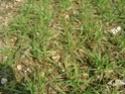 désherbage blé  - Page 5 Dsc02010