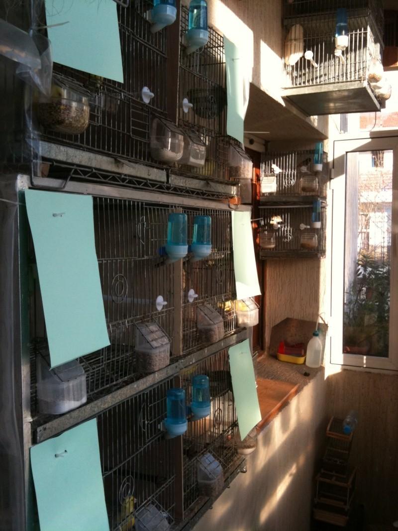 concours du mois février  2012(la pièce d'élevage ) Img_el10