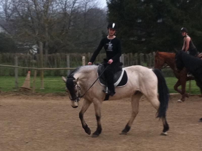 materiel cavalier et cheval GROSSES PROMO JUSQUE FIN DECEMBRE!!! Img_0010