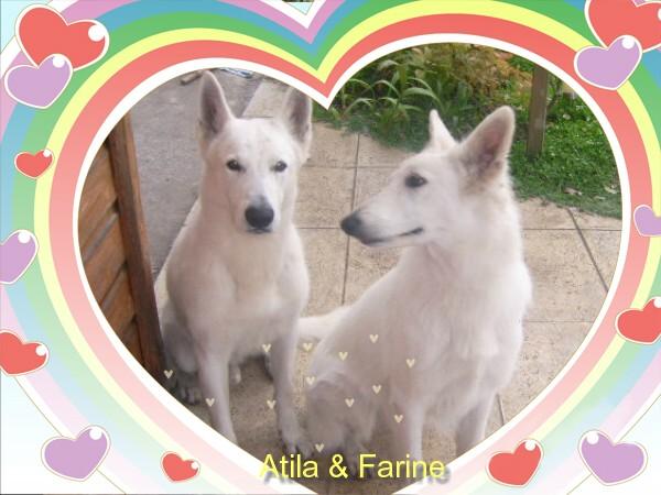 Atila 6 ans adopté Atila_10