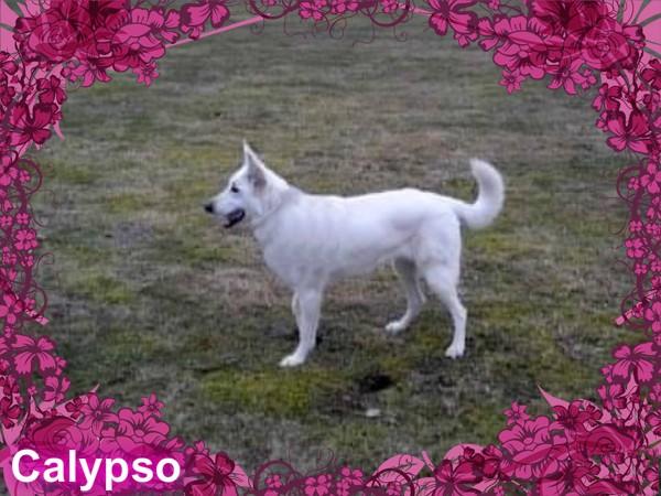 Calypso 4 ans........adoptée Calyps10