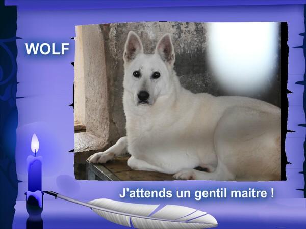 wolf 9 ans (72) Wolf10