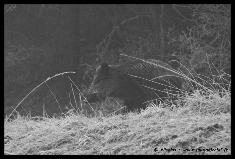 Mes photos animalières + ajout 22/04=> le voilà en bois... - Page 5 Img_0010
