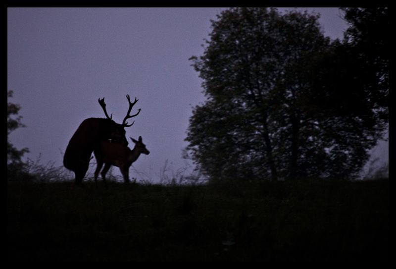 Mes photos animalières + ajout 22/04=> le voilà en bois... - Page 2 Img_2713