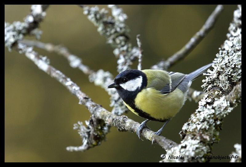 Mes photos animalières + ajout 22/04=> le voilà en bois... Img_3010