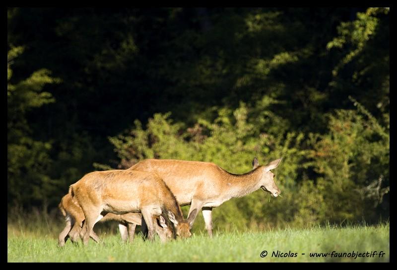 Mes photos animalières + ajout 22/04=> le voilà en bois... - Page 4 Img_6311